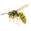 Great feedback on a wasp phobia using BWRT®