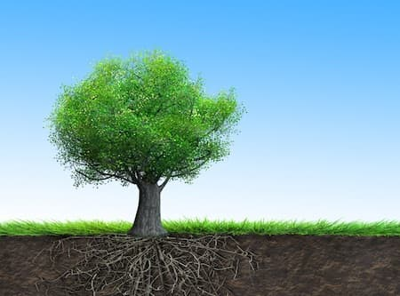 Tree - hypnotherapy for development - Karent Britter Southend on Sea